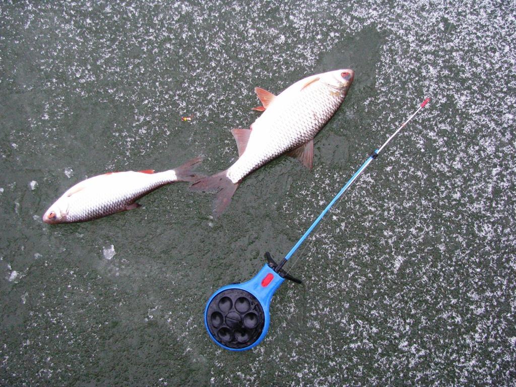 таганрог где ловят рыбу