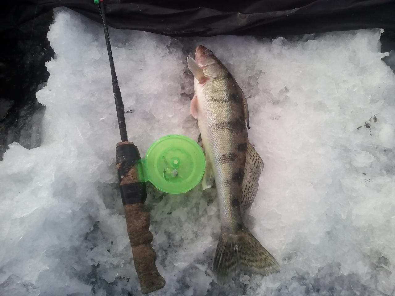 пресноводная рыбалка в судаке