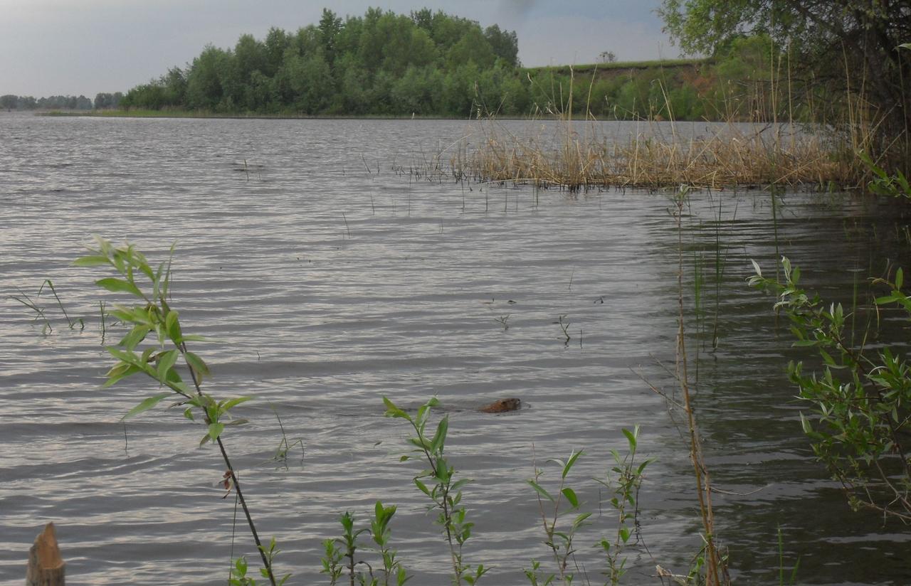 Рыбалка на маховую удочку весной, Ловля весной на маховую удочку Рыбалка - клев тут 9 фотография