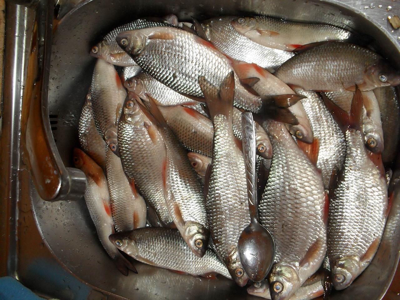 Рыбалка на маховую удочку весной, Ловля весной на маховую удочку Рыбалка - клев тут 10 фотография